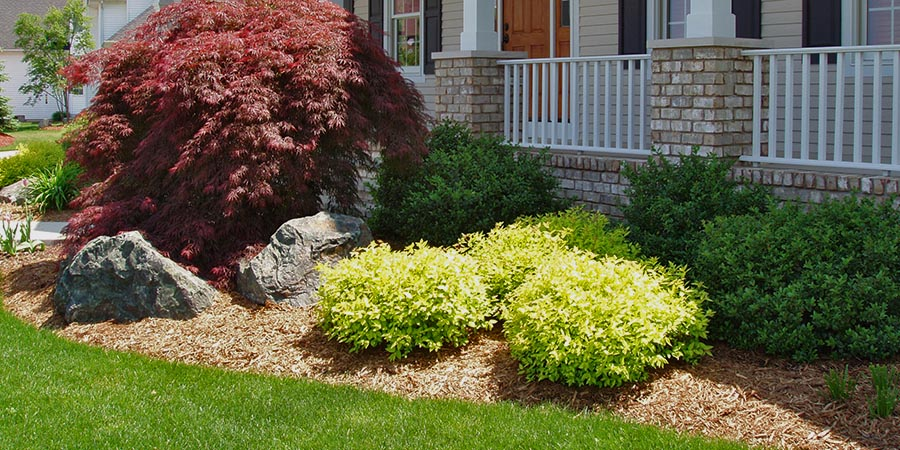 landscaping exterior home bushes