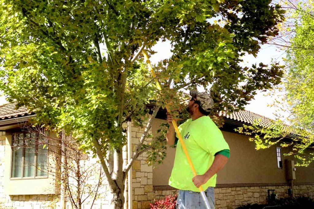 Wichita Tree Trimming