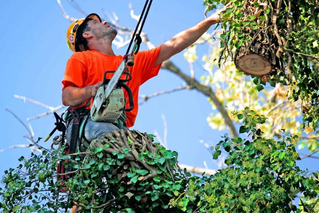 Wichita Man Cutting Tree Branches